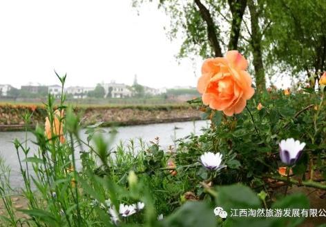 庐山花溪谷