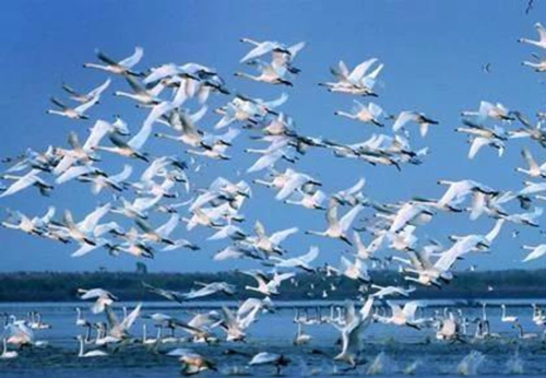 江西旅游必去景点-鄱阳湖